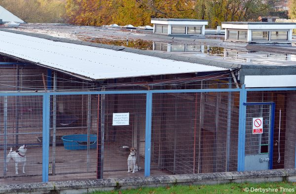 NDET chesterfield rspca 05