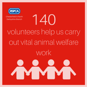 140 volunteers help us carry out vital animal welfare work