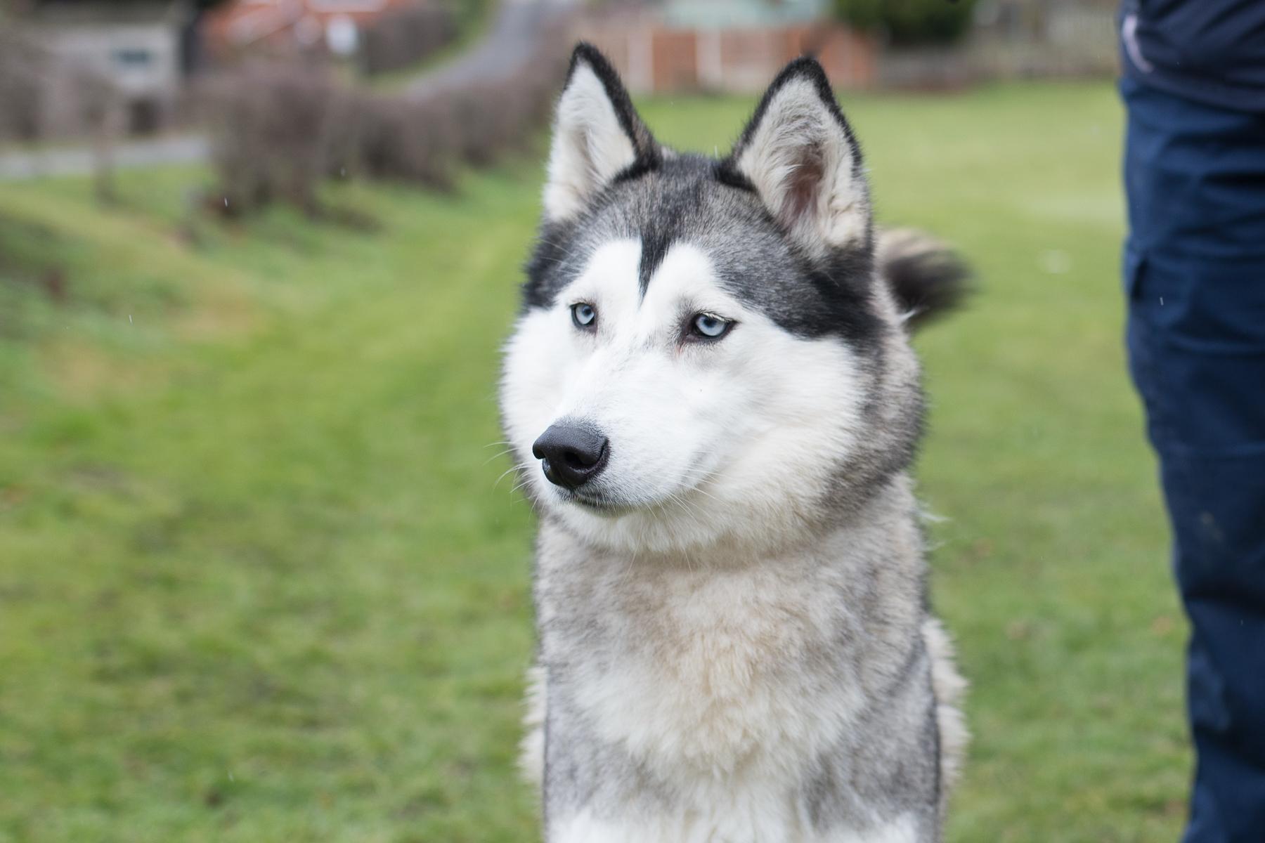 Dog Training Chesterfield