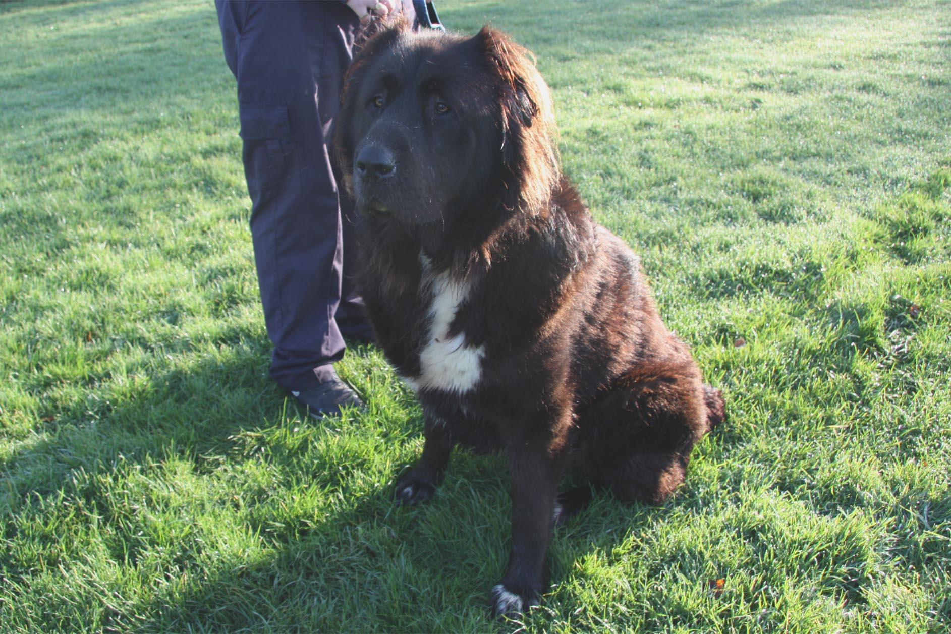 Dog Rehoming Derbyshire Uk