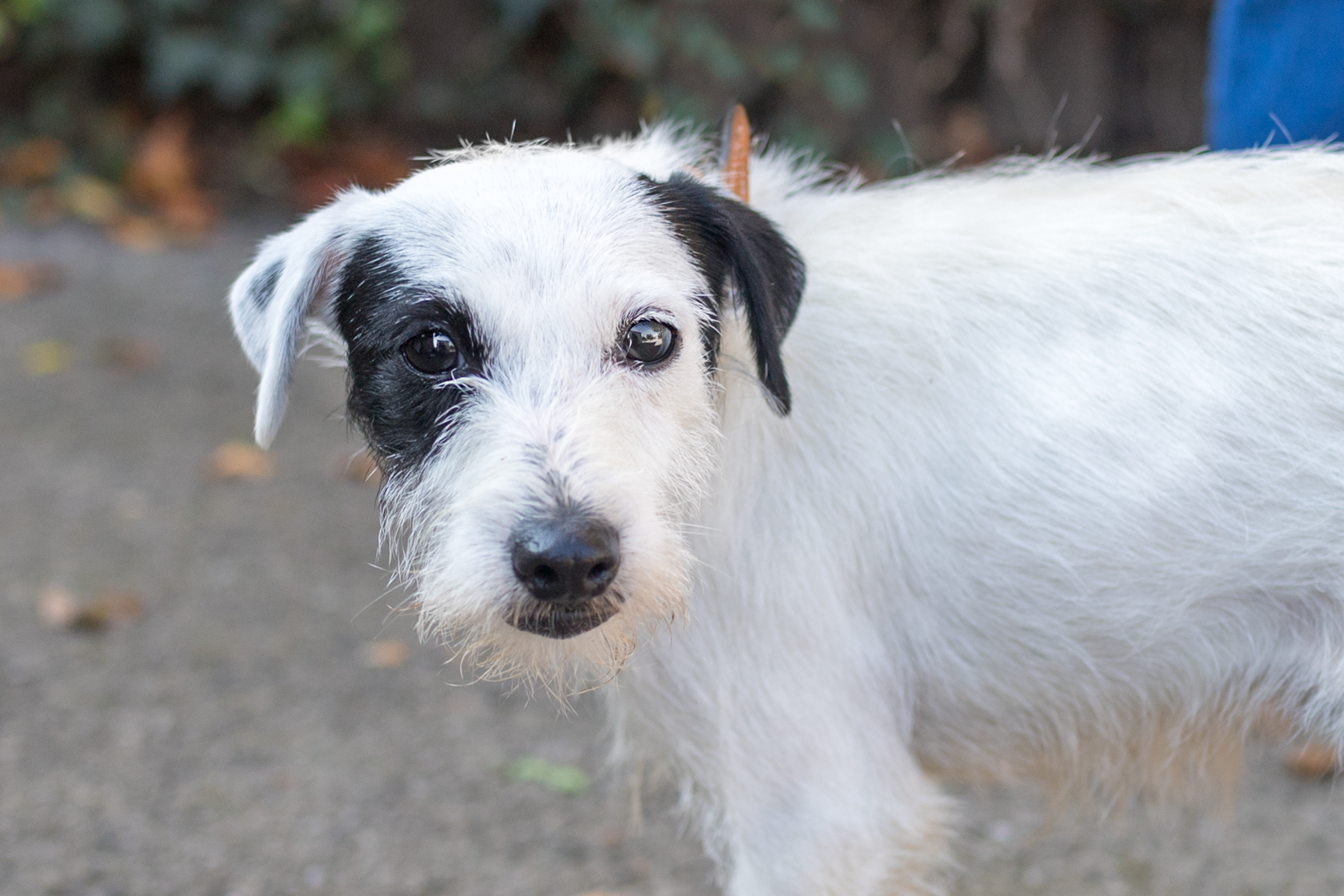 Small Dogs For Rehoming Chesterfield